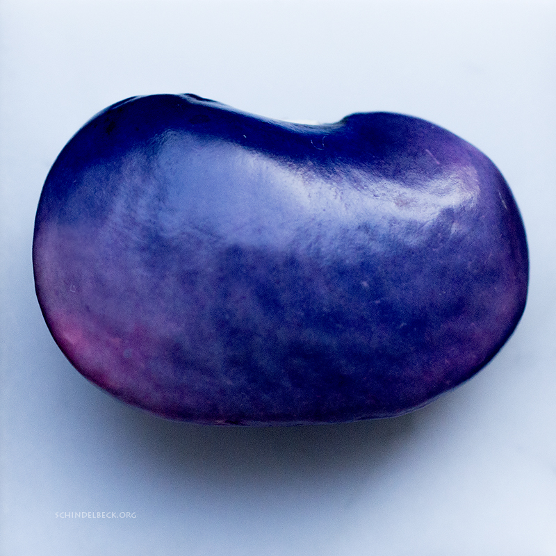 Blue-Bean-Photo-Schindelbeck-800p
