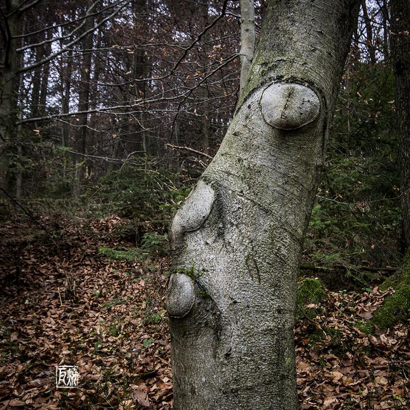 Kirchentagspräsident als Baum verkleidet