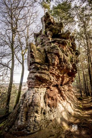 Felsenpfad Dahn - Foto: Schindelbeck Fotografie