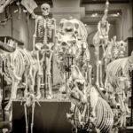 Skelett - Foto Schindelbeck