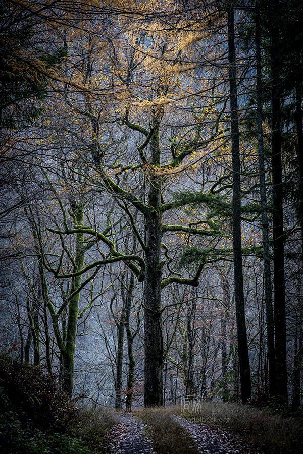Out For A Walk - Landschaftsfotografie Frank Schindelbeck